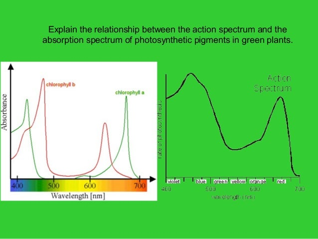 pigments and chlorophyll relationship