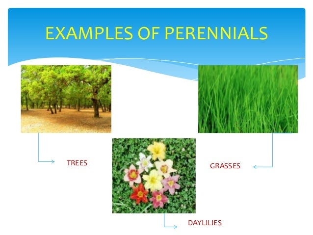 How are annuals and perennials different?   wonderopolis.