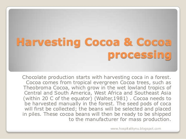 Harvesting Cocoa & Cocoa              processingChocolate production starts with harvesting coca in a forest.  Cocoa comes...