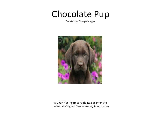 Chocolate Pup Courtesy of Google Images A Likely Yet Incomparable Replacement to A'Kena's Original Chocolate Joy Drop Image