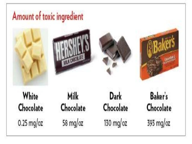 How Much Chocolate Is Toxic To Dogs
