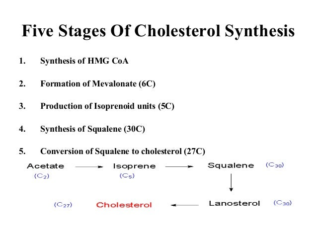 steroid synthesis pathway mnemonic