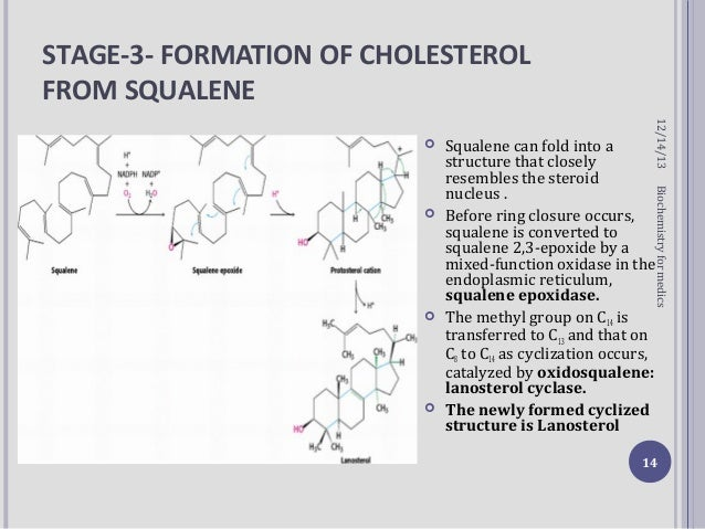 cholesterol synthesis