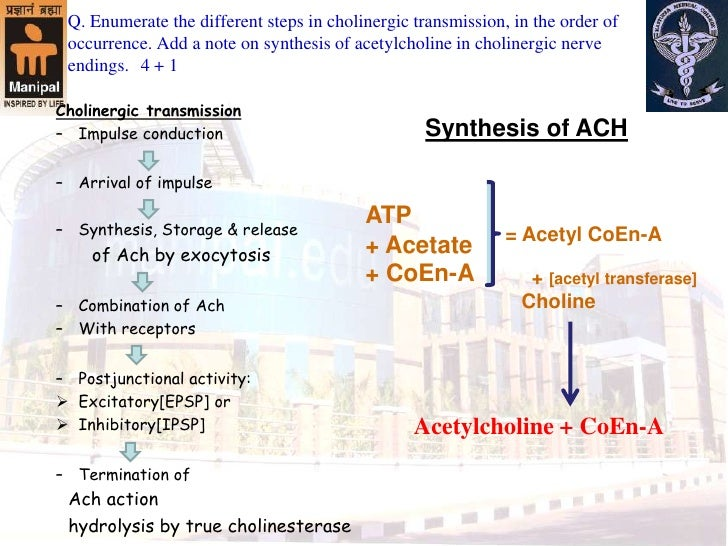 Cholinergic system model questions & answers Slide 2