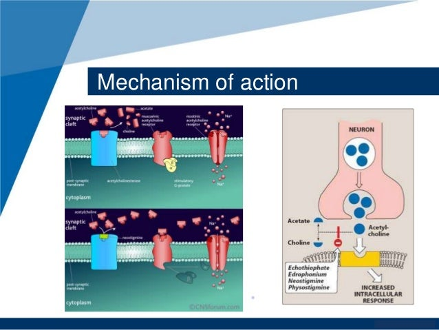 Exelon patch mechanism of action