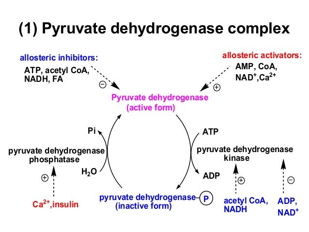 the formation of atp from adp and pi is an anabolic reaction