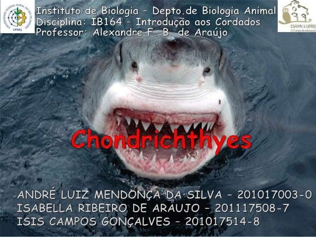 CLASSIFICAÇÃO: Domínio: Eukarya Reino: Animal  Filo: Chordata Subfilo: Vertebrata Classe: Chondrichthyes , do grego chondr...