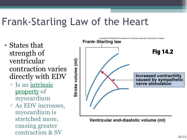 cardiac output peripheral resistance pressure relationship