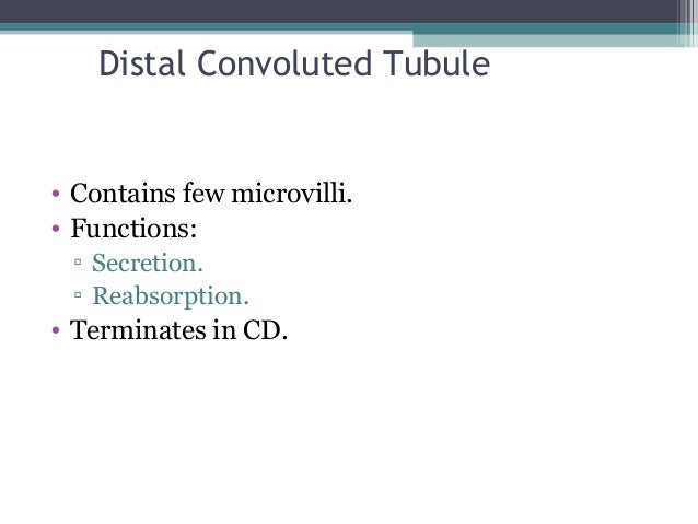 Distal Convoluted Tubule • Contains few microvilli. • Functions: ▫ Secretion. ▫ Reabsorption. • Terminates in CD.