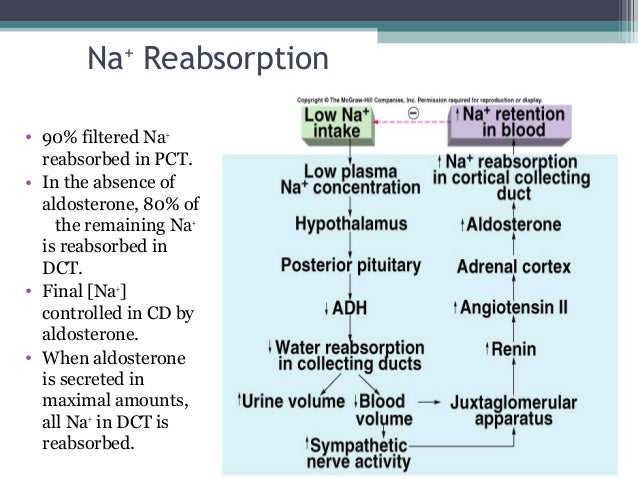 Na+ Reabsorption • 90% filtered Na+ reabsorbed in PCT. • In the absence of aldosterone, 80% of the remaining Na+ is reabso...