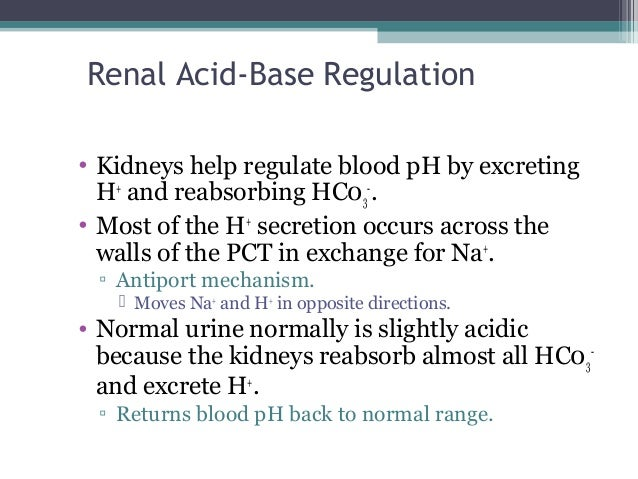 Renal Acid-Base Regulation • Kidneys help regulate blood pH by excreting H+ and reabsorbing HC03 - . • Most of the H+ secr...