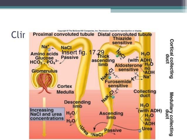 Clinical Diuretics Sites of Action Insert fig. 17.29