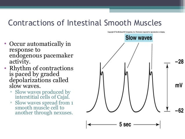 activity of gastrointestinal smooth muscle The inhibitory action of adrenaline on intestinal smooth muscle in relation to its action on phosphorylase activity.