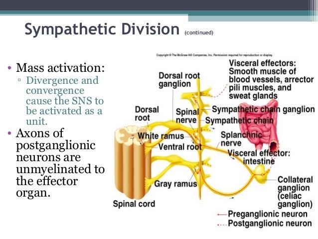 sympathetic and parasympathetic nervous system pdf