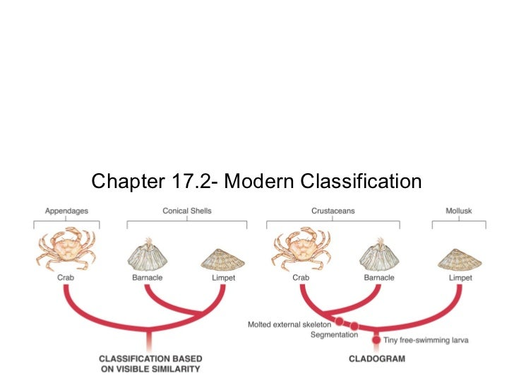 Chapter 17.2- Modern Classification