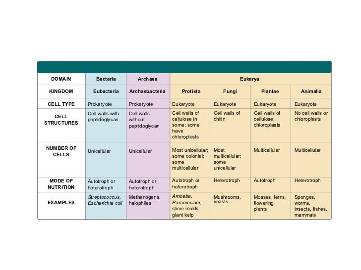 microbiology how are archae different from Comparisons related to microbiology differences and comparisons in category microbiology there are 11 articles in this category.