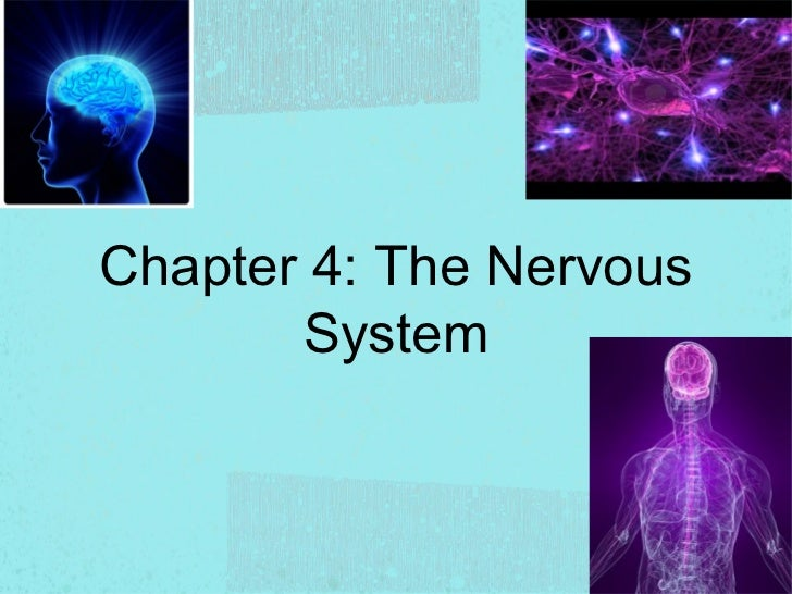 Chapter 4: The Nervous       System