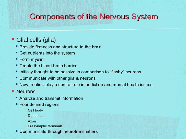 Components of the Nervous System Glial cells (glia)    Provide firmness and structure to the brain    Get nutrients int...