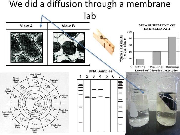 We did a diffusion through a membrane                   lab