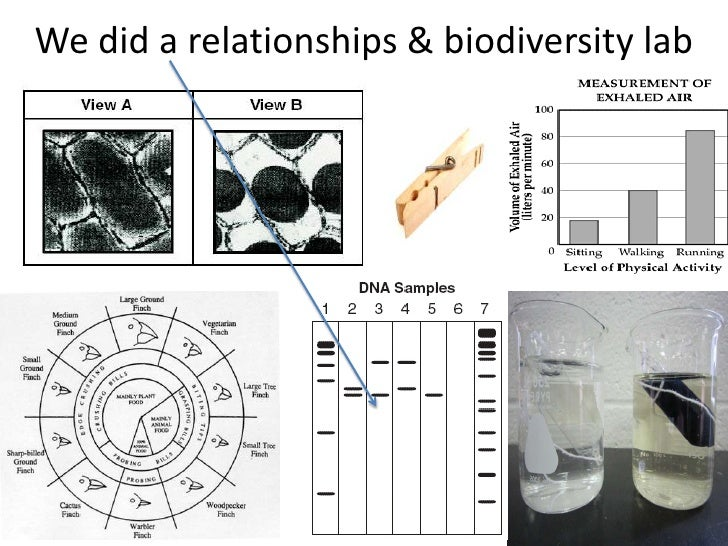 We did a relationships & biodiversity lab