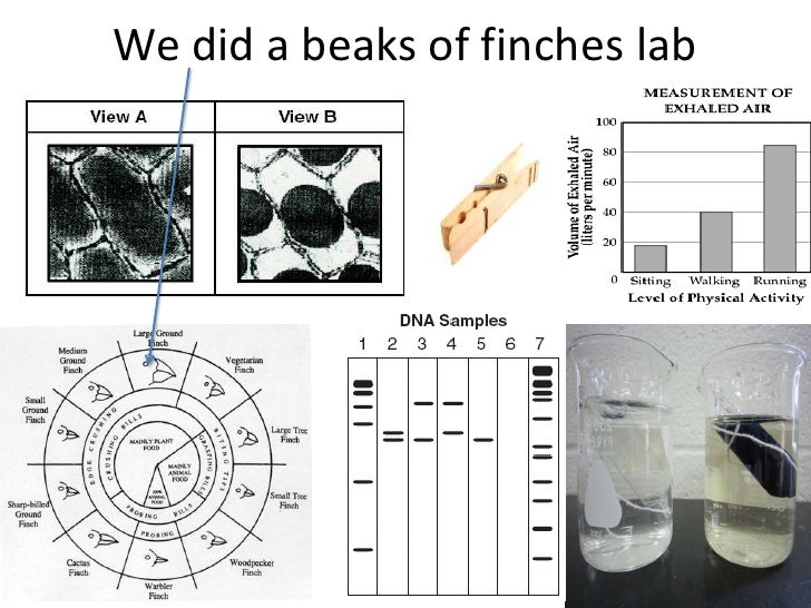 We did a beaks of finches lab