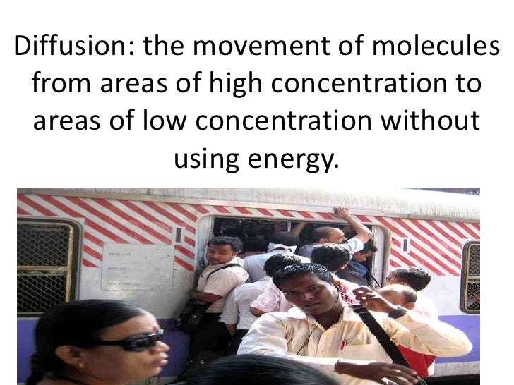 Diffusion: the movement of molecules from areas of high concentration to areas of low concentration without             us...