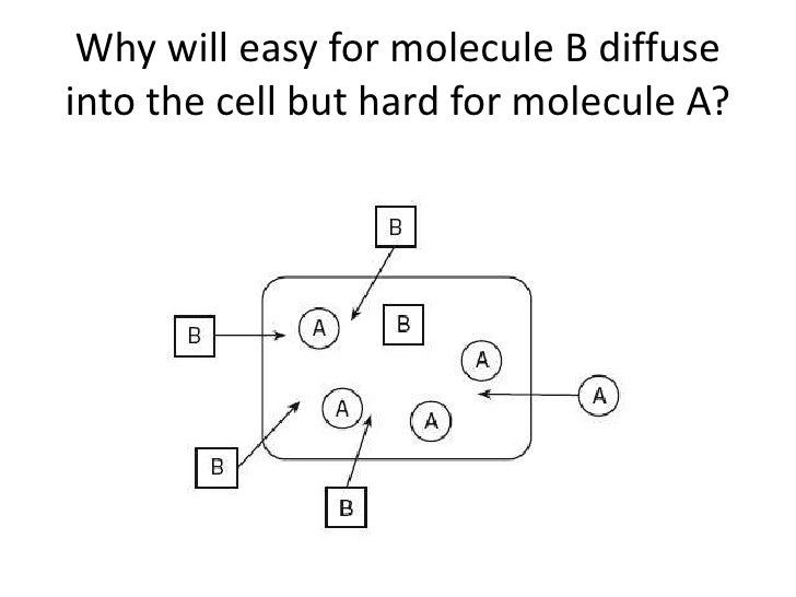 Why will easy for molecule B diffuseinto the cell but hard for molecule A?