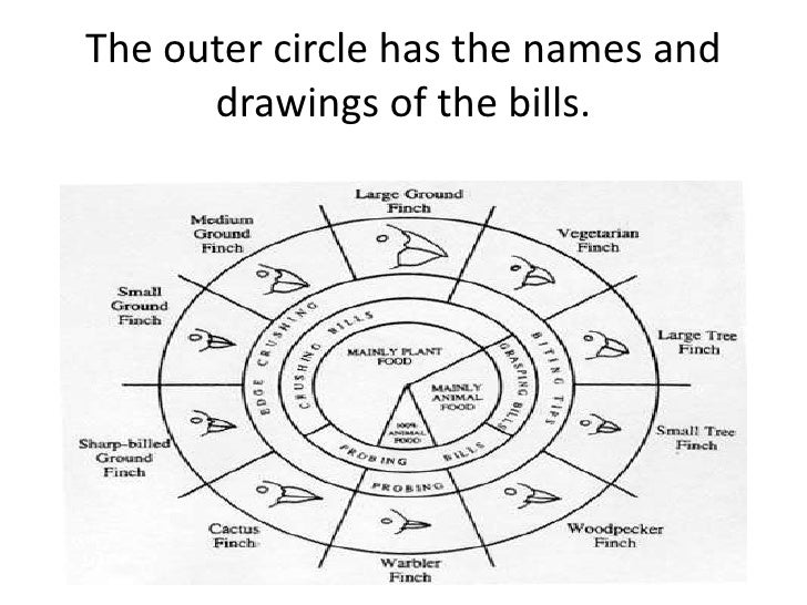 The inner circle shows the type of the       food each species eats.
