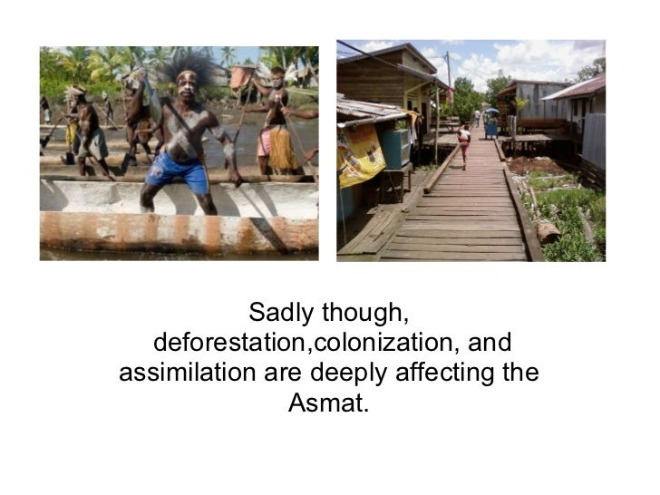 Sadly though, deforestation,colonization, and assimilation are deeply affecting the Asmat.