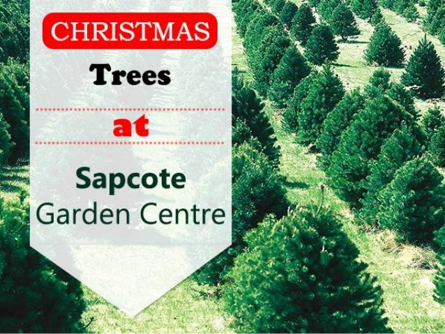 • Choosing the right Christmas Tree is important, that's why we always give you a hand, un-netting, and thoroughly checkin...