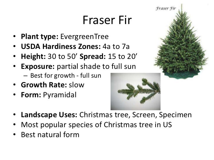 christmas trees - Type Of Christmas Trees