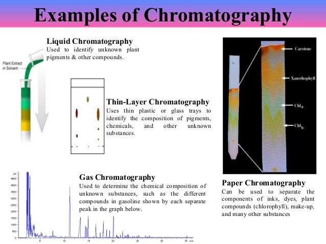 plant pigment chromatography lab