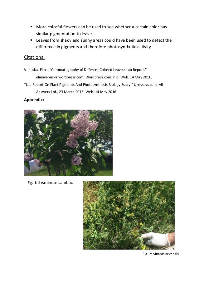 plant pigments and photosynthesis lab report