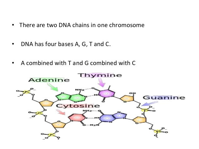 AP  Chapter 16  The Molecular Basis of Inheritance Worksheet for 9th besides Thomas Hunt Morgan and fruit flies  video    Khan Academy likewise 1 5 Worksheet Answer Keys furthermore  moreover Single Gene Disorders in addition Chromosomal basis of ge ics as well Chapter8   Chapter 8 The Cellular Basis of Reproduction and as well The Ge ics of Cancer   National Cancer Insute besides DNA  video    Molecular ge ics   Khan Academy additionally Biological Basis of Heredity  Molecular Level of Ge ics furthermore Ge ic basis of inheritance together with Alleles and Genes   YouTube moreover The chromosomal basis of inheritance  article    Khan Academy likewise Ge ics Worksheet Middle   Briefencounters furthermore Ge ics   Mitosis and Meiosis  Reading ignment w  worksheet   TpT as well Chromosomal basis of ge ics. on chemical basis of genetics worksheet