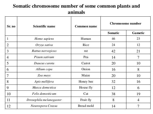 Chromosome 53576968 on Fly Worksheet