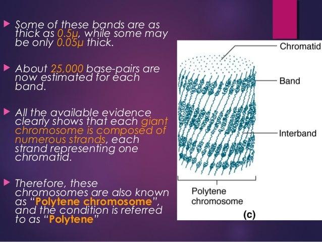 Chromosomes slideshare - 웹