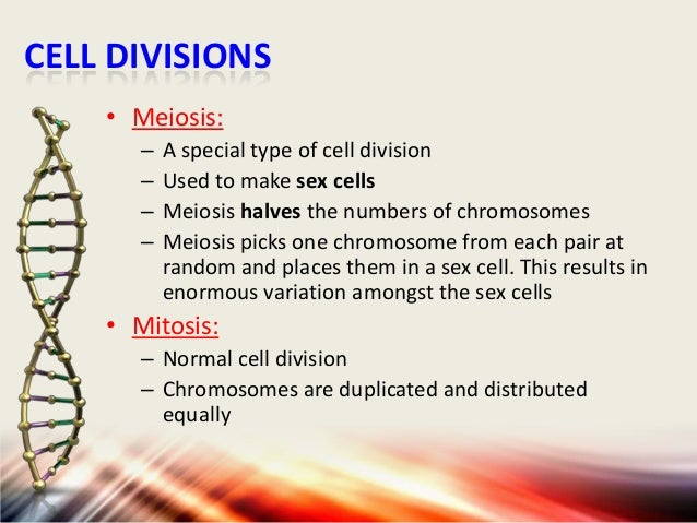 CELL DIVISIONS • Meiosis: – – – –  A special type of cell division Used to make sex cells Meiosis halves the numbers of ch...