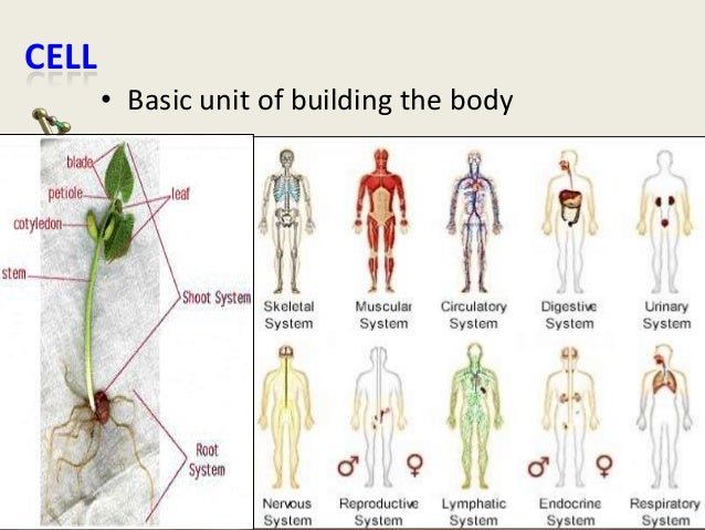CELL • Basic unit of building the body