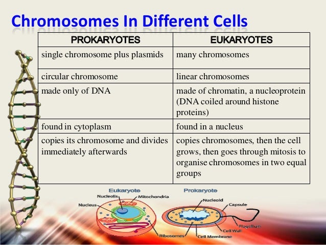 differences between plasmid and chromosomal dna