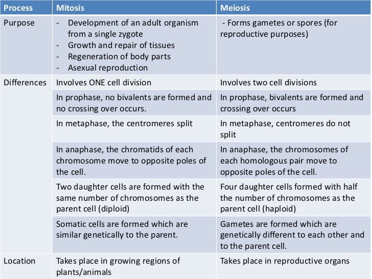 chromosomes and meiosis 3 2 chromosomes and meiosis 26