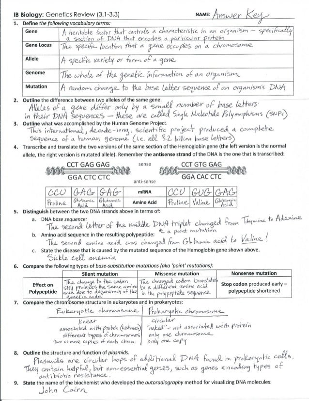 Genes And Chromosomes Worksheet Answers - Worksheet List