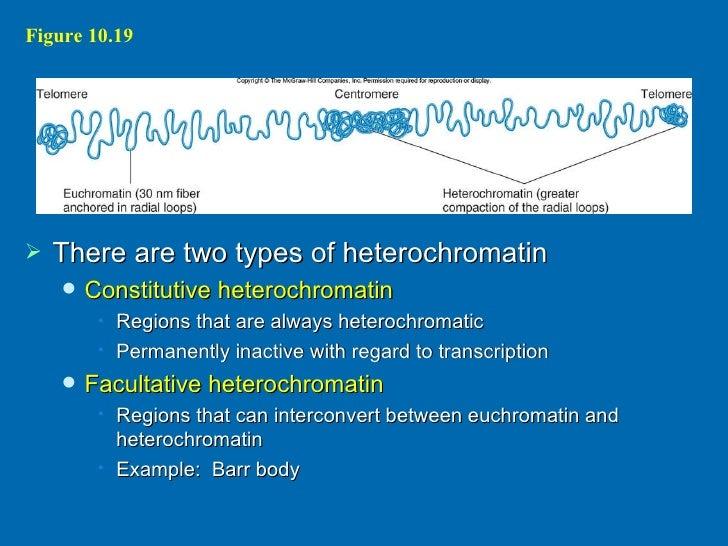 essay facultative heterochromatin
