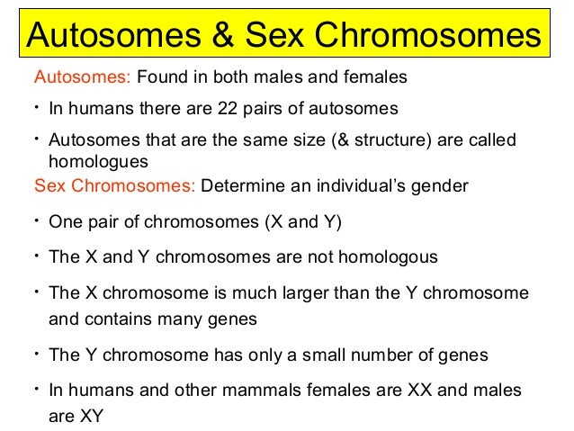 distinguish sex chromosome and autosomes in Coventry