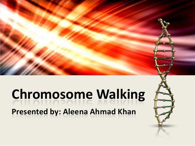 Chromosome Walking Presented by: Aleena Ahmad Khan