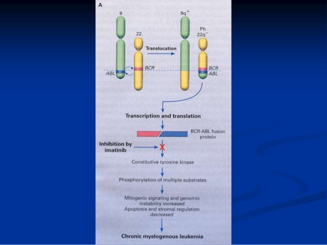 Philadelphia Chromosome • More than 95% of patients with CML has Philadelphia (Ph) chromosome  A subset of patients with ...