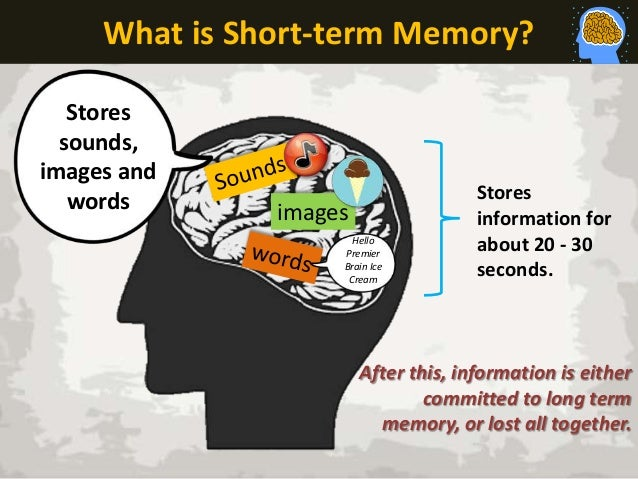Short Term And Long Term Memory : Short term memory characteristics the