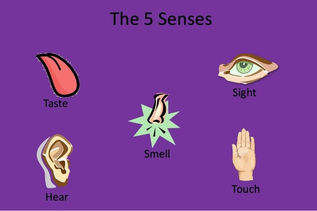 observing with 5 senses - 638×426