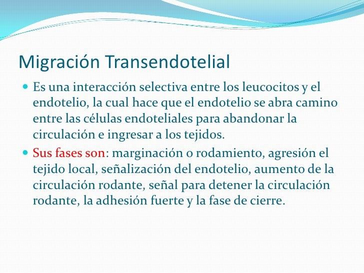 Migración Transendotelial  Es una interacción selectiva entre los leucocitos y el   endotelio, la cual hace que el endote...
