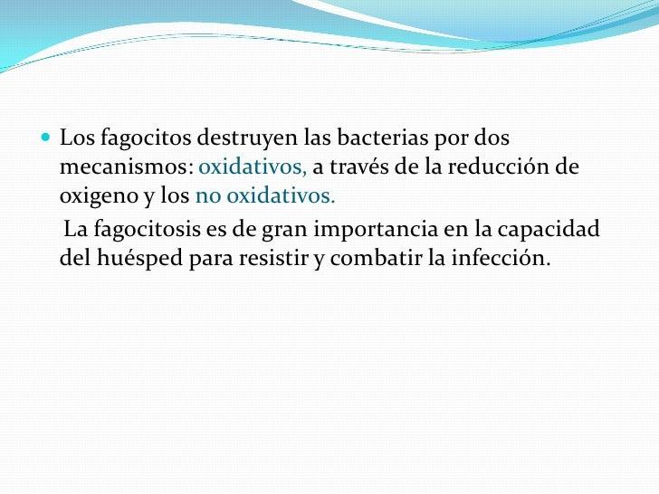  Los fagocitos destruyen las bacterias por dos  mecanismos: oxidativos, a través de la reducción de  oxigeno y los no oxi...