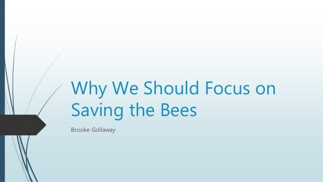 Why We Should Focus on Saving the Bees Brooke Gollaway